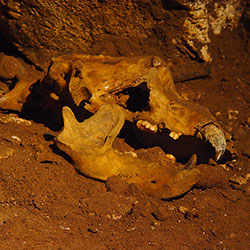 Hall with the Skeleton of the Cave Bear.